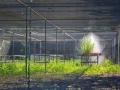 Estufa de experimentação - Campos dos Goytacazes (Foto: Daniel Dias)