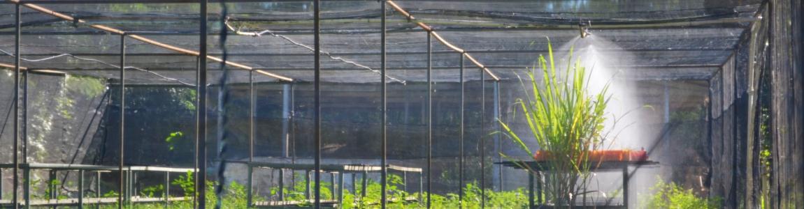 Estufa de experimentação - câmpus Campos dos Goytacazes