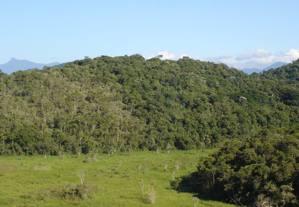 Florestas secundárias na Reserva Biológica de Poço das Antas, Silva Jardim – Rio de Janeiro