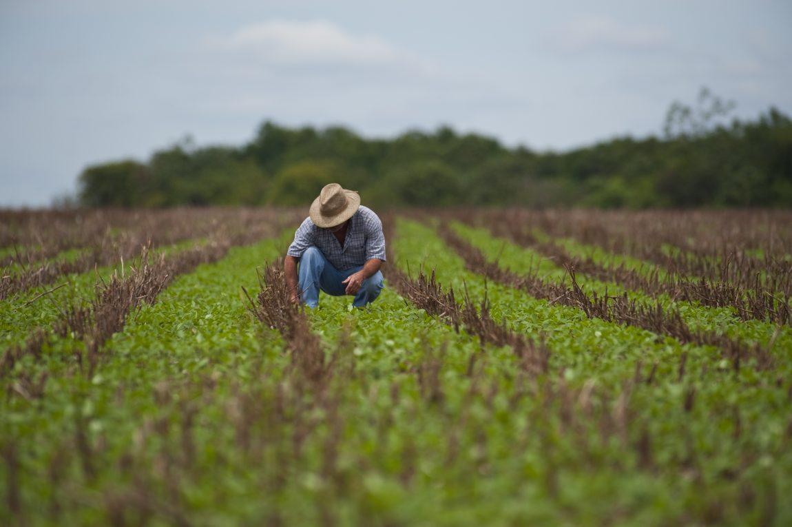 Agrônomos ganham experiência com programa da Rural que os insere no mercado (Foto: Divulgação)